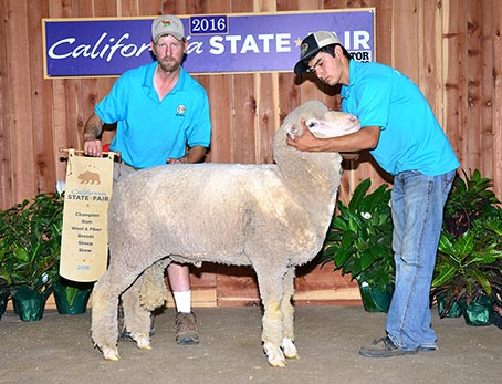 champion white mernio ram california state fair 2016
